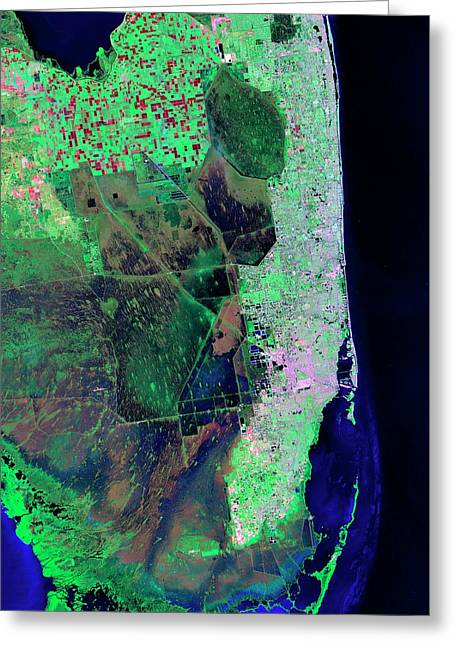 Florida Greeting Card by Nasa/matt Radcliff/usgs Earth Explorer