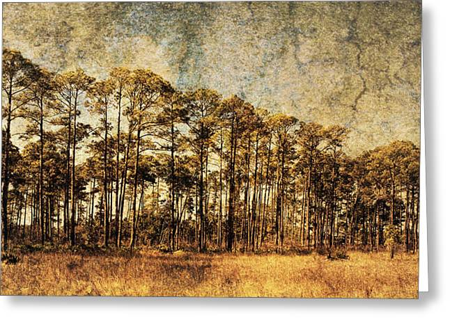 Reverence Greeting Cards - Florida Pine 4 Greeting Card by Skip Nall