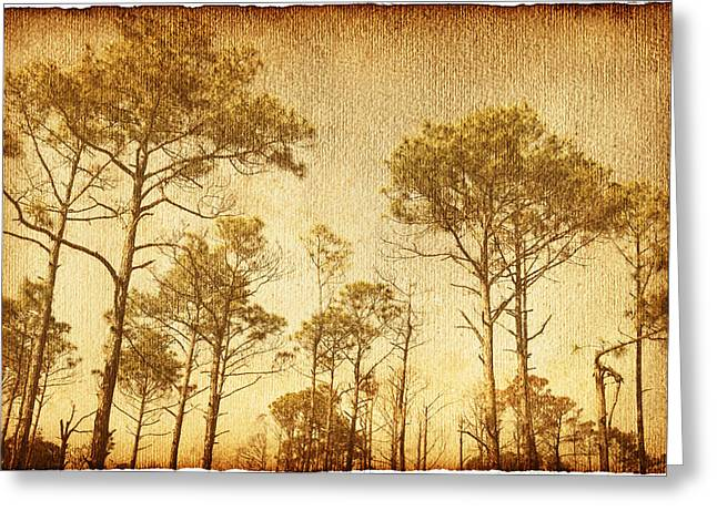 Reverence Greeting Cards - Florida Pine 5 Greeting Card by Skip Nall