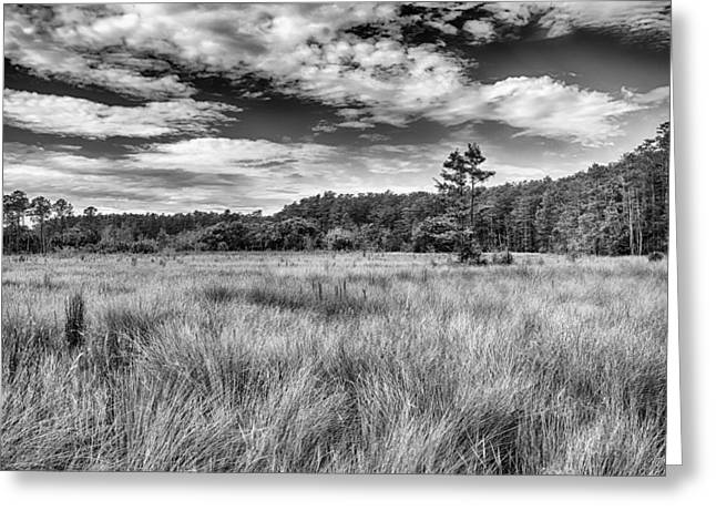 Saw Greeting Cards - Florida SawGrass Prairie    Greeting Card by George Buxbaum