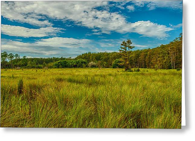 Saw Greeting Cards - Florida SawGrass Prairie II Greeting Card by George Buxbaum