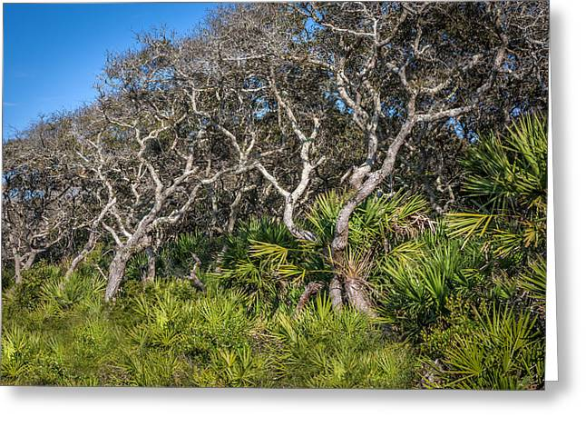 Oak Hammocks Greeting Cards - Florida Scrub Oaks  Greeting Card by Rich Franco
