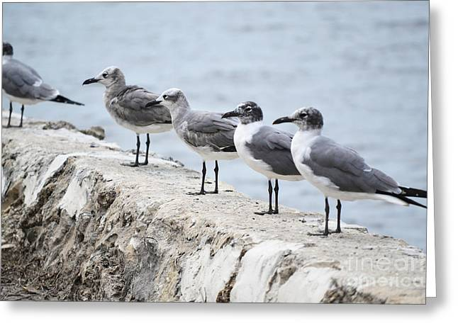 Ocean Photography Greeting Cards - Florida Seagull Shore Greeting Card by Andrea Hazel Ihlefeld