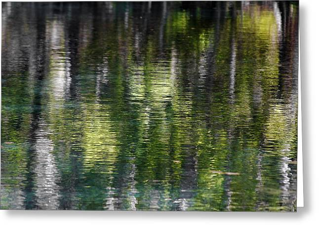 Interior Scene Greeting Cards - Florida Silver Springs River Greeting Card by Christine Till
