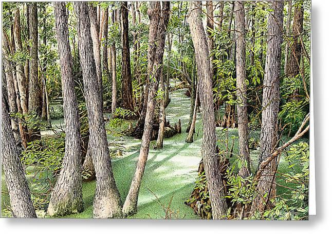 Florida Panhandle Paintings Greeting Cards - Florida Swamp Greeting Card by Robert Hinves