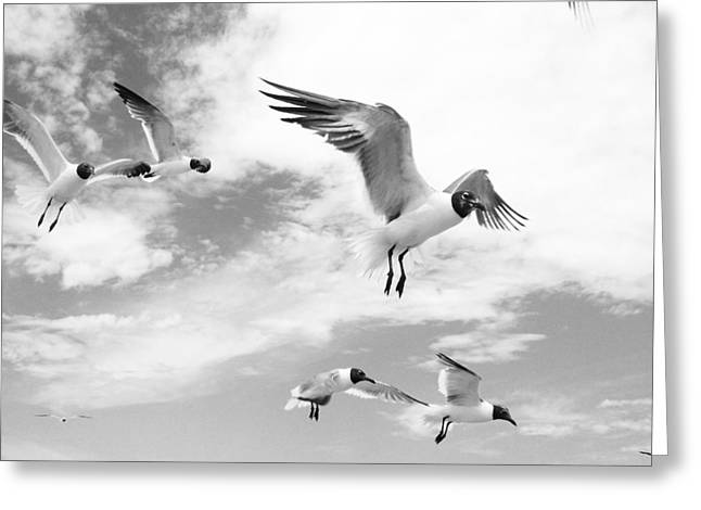 Tern Greeting Cards - Florida Terns in Black and White Greeting Card by Shere Crossman