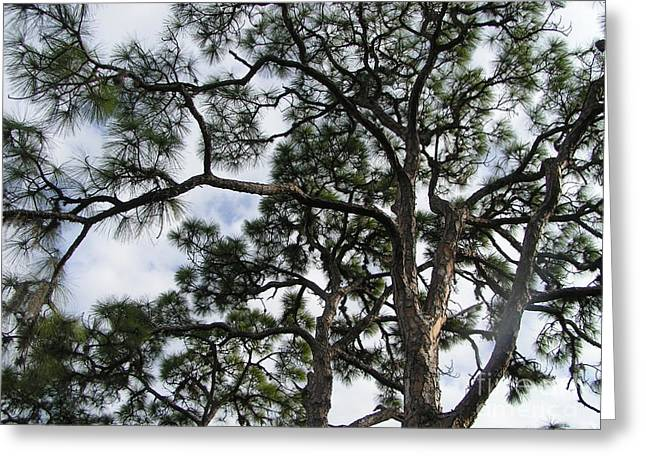 Pines Pastels Greeting Cards - Florida Trees Sky Greeting Card by Tracy L Teeter