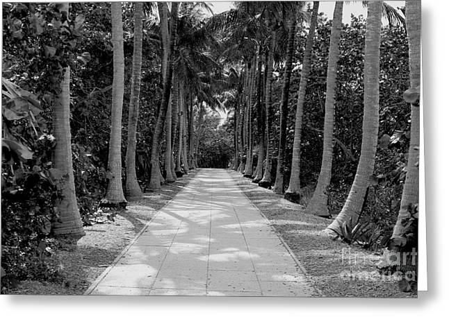 Plant Hollywood Greeting Cards - Florida Walkway Black and White Greeting Card by Carey Chen