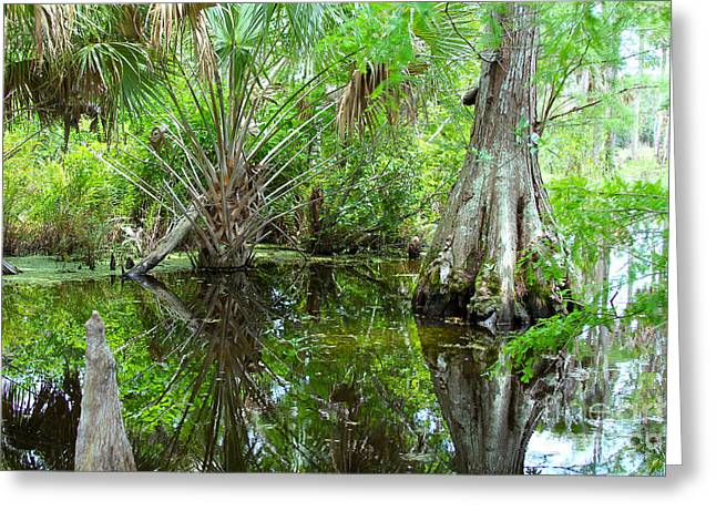 Wood Turtle Greeting Cards - Florida Wetland Greeting Card by Carey Chen