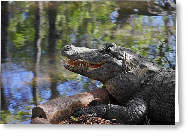 Beast Greeting Cards - Florida - Where the Alligator smiles Greeting Card by Christine Till
