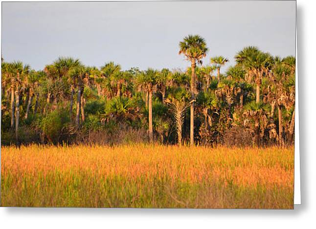Saw Greeting Cards - Florida wilderness pano Greeting Card by David Lee Thompson