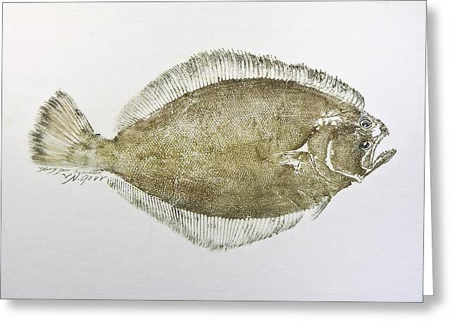 Nancy Gorr Greeting Cards - Flounder Greeting Card by Nancy Gorr