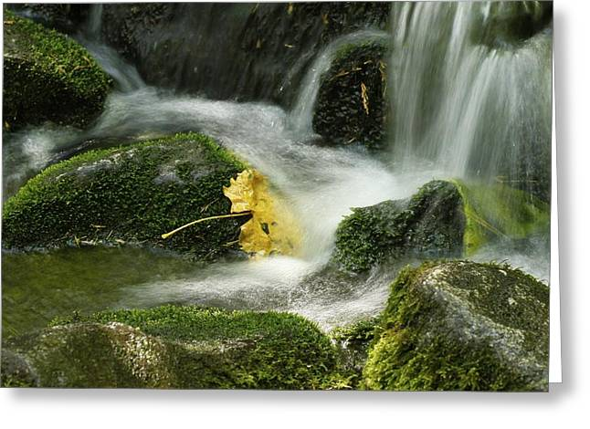 Kimberly Oegerle Greeting Cards - Flow Greeting Card by Kimberly Oegerle