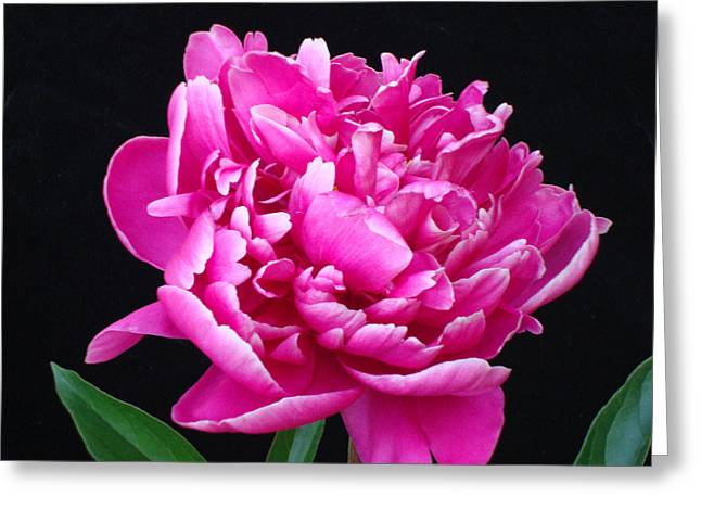 Edward P Greeting Cards - Flower 2 Greeting Card by Edward P