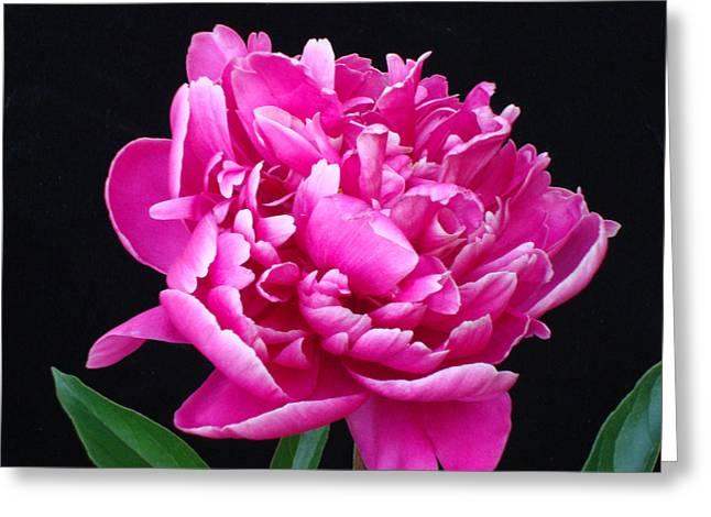 Flower 2 Greeting Card by Edward P