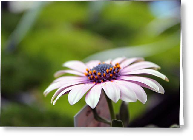 Kelly Photographs Greeting Cards - Flower 2 Greeting Card by Kelly Howe