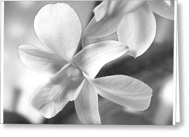 White Digital Greeting Cards - White Orchid Greeting Card by Mike McGlothlen