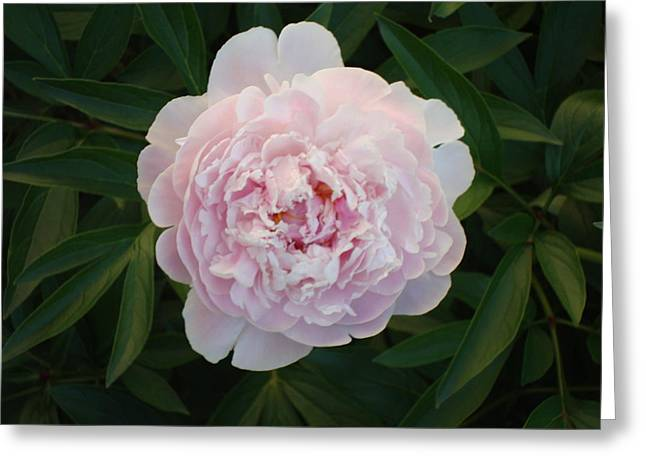 Edward P Greeting Cards - Flower 3 Greeting Card by Edward P