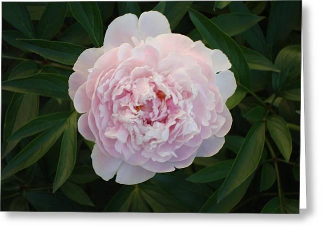 Flower 3 Greeting Card by Edward P