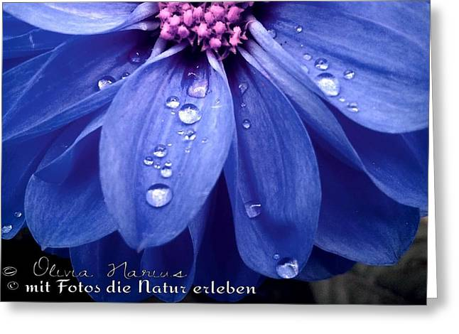 Flower And Drops Greeting Card by Olivia Narius