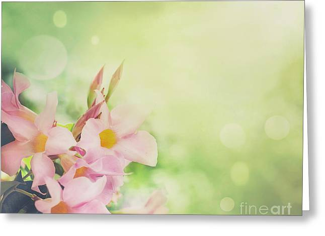 Transparent Green Greeting Cards - Flower background Greeting Card by Mythja  Photography