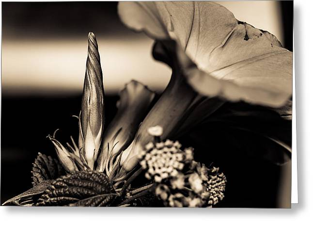 Stigma Greeting Cards - Flower Beauty II Greeting Card by Marco Oliveira