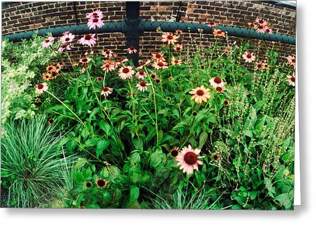 High Line Greeting Cards - Flower Bed, High Line, Chelsea Greeting Card by Panoramic Images