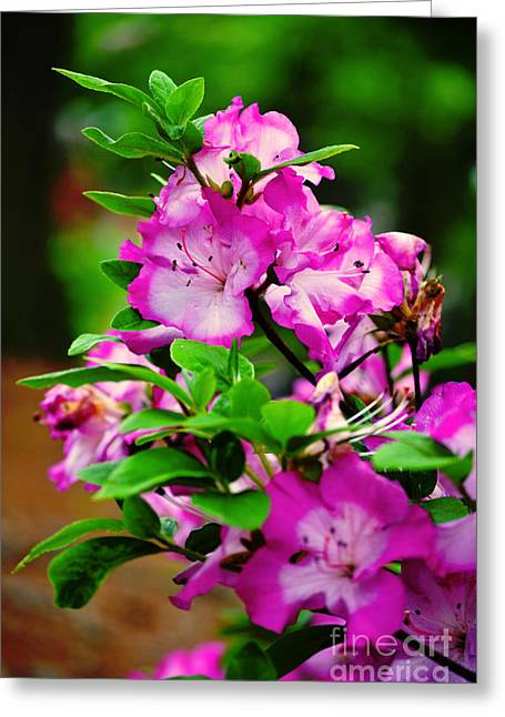 Ru Greeting Cards - Flower Blooms Greeting Card by Lj Lambert
