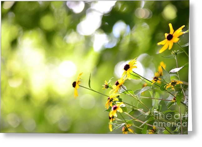 Brown Eye Susan Greeting Cards - Flower Bokeh Greeting Card by Holden Parker