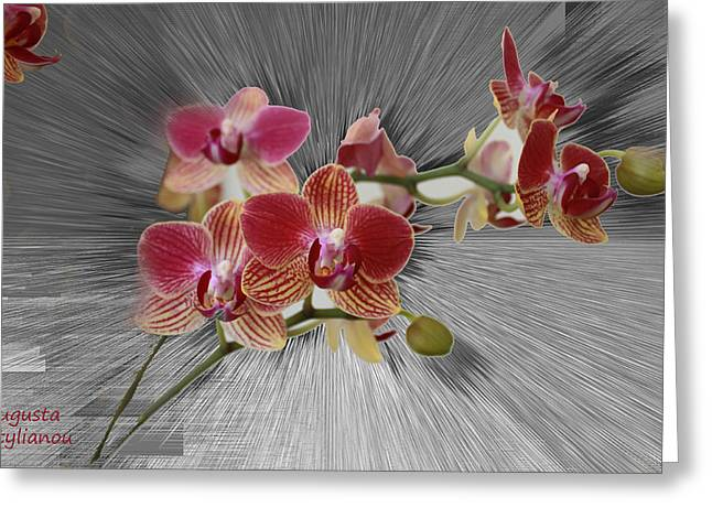 Photo Gallery Digital Greeting Cards - Flower Branch Greeting Card by Augusta Stylianou