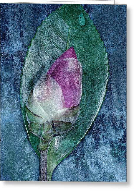 Russ Brown Greeting Cards - Flower bud Greeting Card by Russ Brown