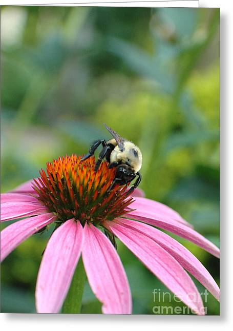 Green Day Greeting Cards - Flower Bumble Bee Greeting Card by Jt PhotoDesign