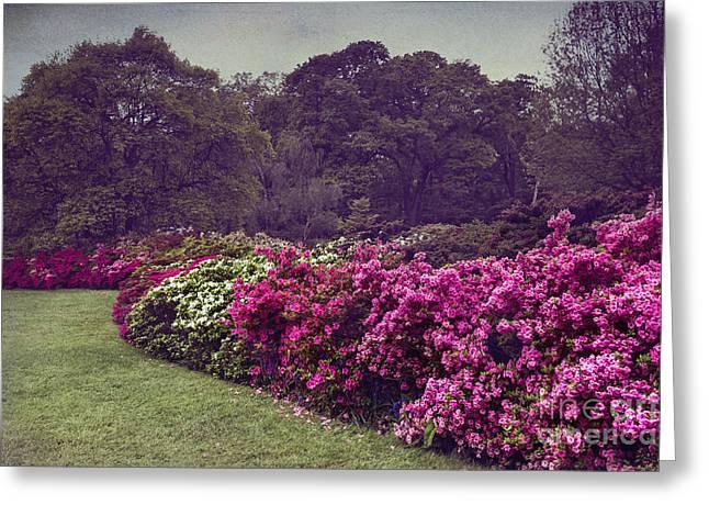 Garden Scene Digital Greeting Cards - Flower Bush Greeting Card by Svetlana Sewell