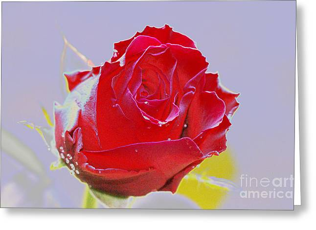 Abstract Rose Abstract Greeting Cards - Flower Greeting Card by Carol Lynch