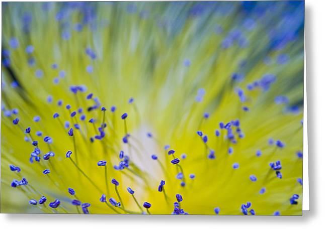 Flower Greeting Card by Juli Scalzi