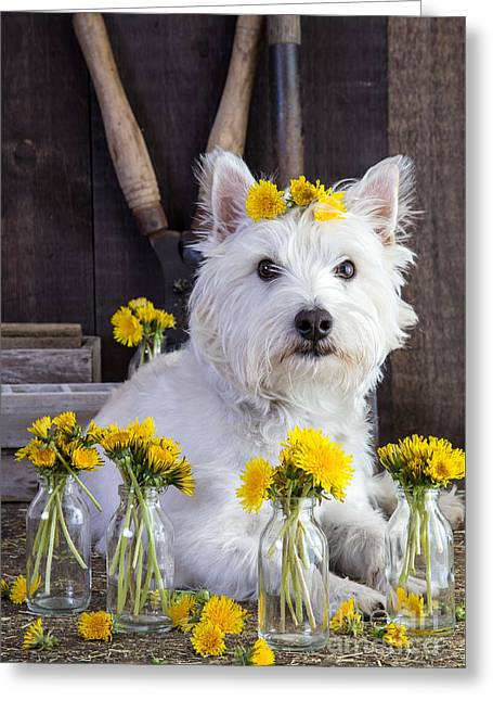 Dogs Photographs Greeting Cards - Flower Child Greeting Card by Edward Fielding
