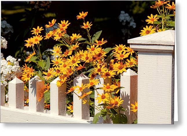 Flower - Coreopsis - The warmth of Summer Greeting Card by Mike Savad