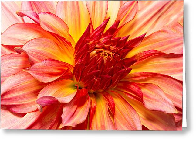 Watermelon Greeting Cards - Flower - Dahlia - Natures breath taker Greeting Card by Mike Savad