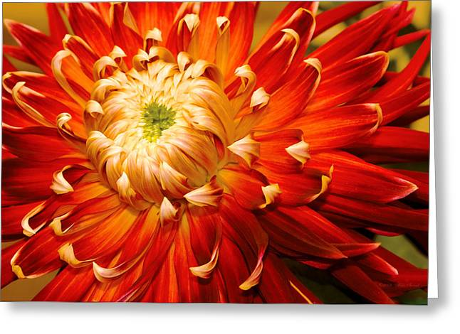 Burst Greeting Cards - Flower - Dahlia - Natures Radiance  Greeting Card by Mike Savad