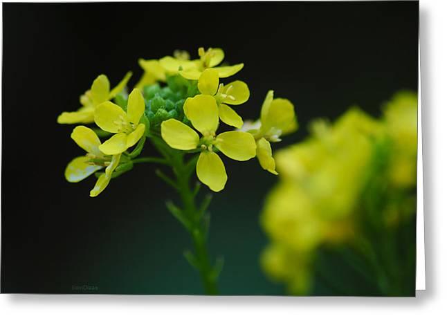 Diaae Bakri Greeting Cards - Flower Greeting Card by Diaae Bakri