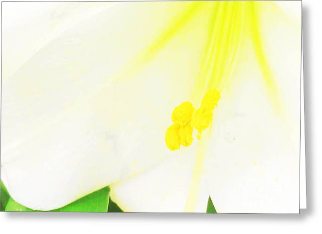 Stamen Digital Art Greeting Cards - Flower -Easter Lily Macro - Luther FIne Art Greeting Card by Luther  Fine Art
