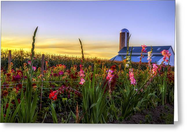 Flower Farm Greeting Card by Mark Papke