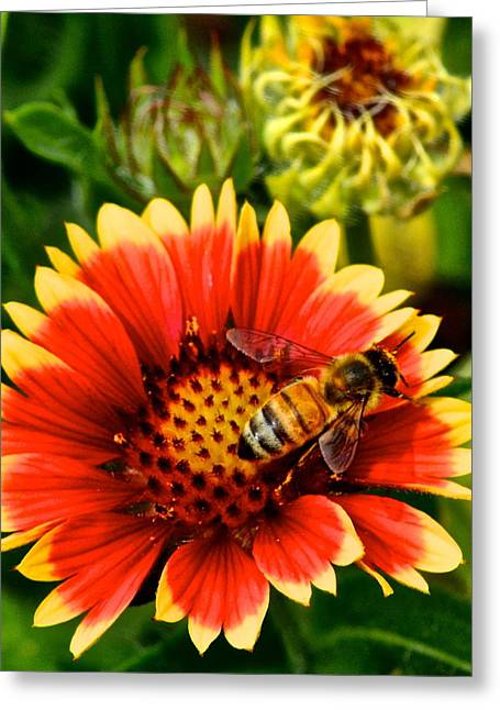 Germinate Greeting Cards - Flower Garden Greeting Card by Frozen in Time Fine Art Photography