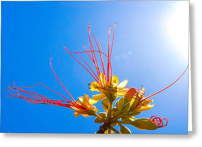 Alejandro Greeting Cards - Flower in the Sun Greeting Card by Alejandro Quezada