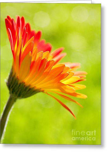 Sun Room Digital Art Greeting Cards - Flower in the Sunshine - Orange Green Greeting Card by Natalie Kinnear