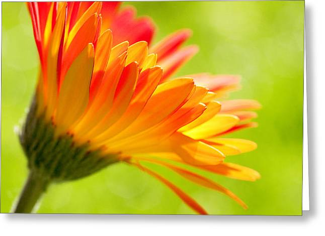 Flower in the Sunshine - Orange Green Greeting Card by Natalie Kinnear