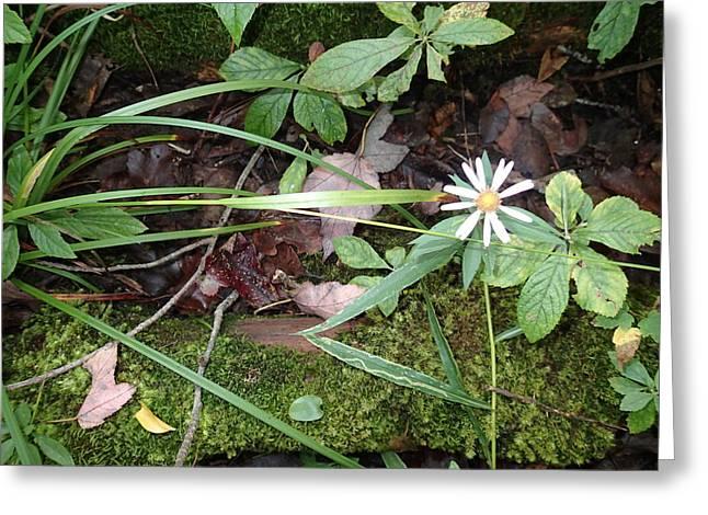 Robert Nickologianis Greeting Cards - Flower in the woods Greeting Card by Robert Nickologianis