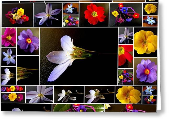 Joyce Woodhouse Greeting Cards - Flower In Winter. Greeting Card by Joyce Woodhouse
