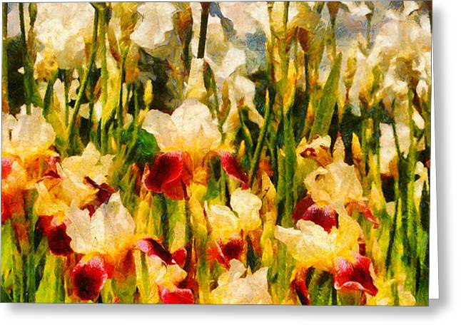 Flower - Iris - Mildred Presby 1923 Greeting Card by Mike Savad