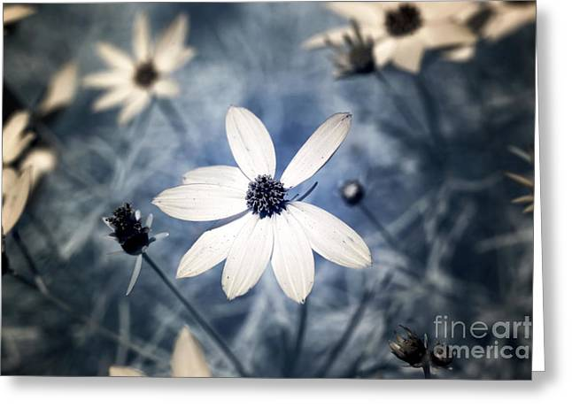 Black Eyed Susan Print Greeting Cards - Flower Light infrared Greeting Card by John Rizzuto
